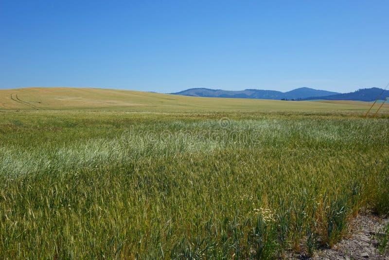 Région de Palouse - Idaho du nord photo stock