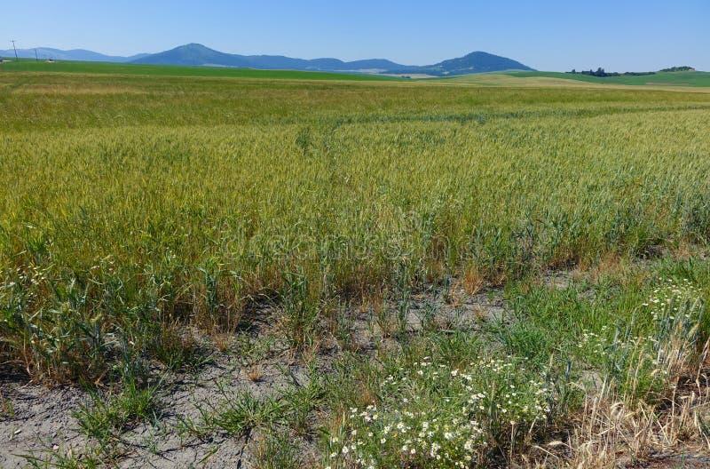 Région de Palouse - Idaho du nord photo libre de droits