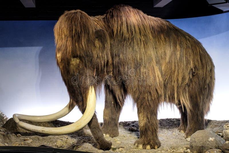 Région du Danemark - de la Zélande - Copenhague - musée d'histoire naturelle - photos stock