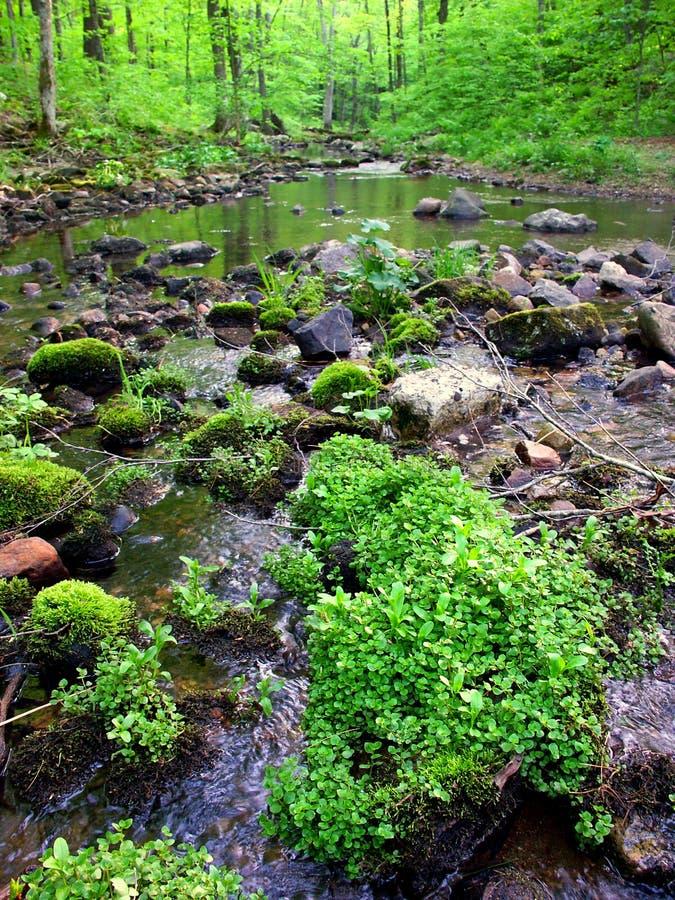 Région naturelle d'état de cavité de Baxters photos libres de droits