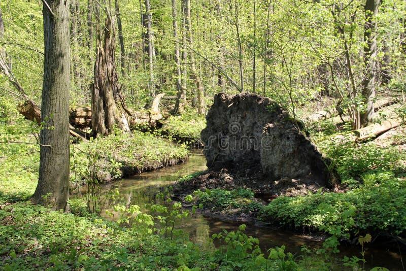 Région sauvage au printemps photographie stock