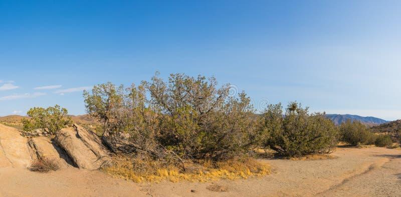 Région sauvage de désert de Mojave photographie stock
