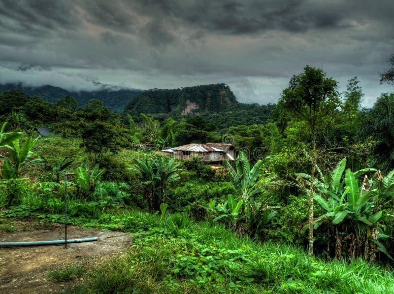 Région sauvage luxuriante merveilleuse de la forêt amazonienne de l'Equateur photo libre de droits
