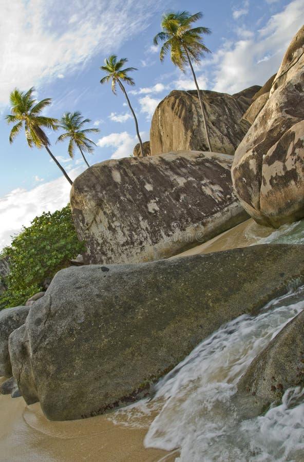 Région sauvage tropicale de bord de la mer   image libre de droits