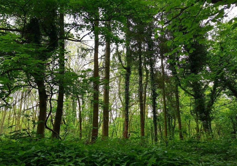 Régions boisées de Kedleston images libres de droits
