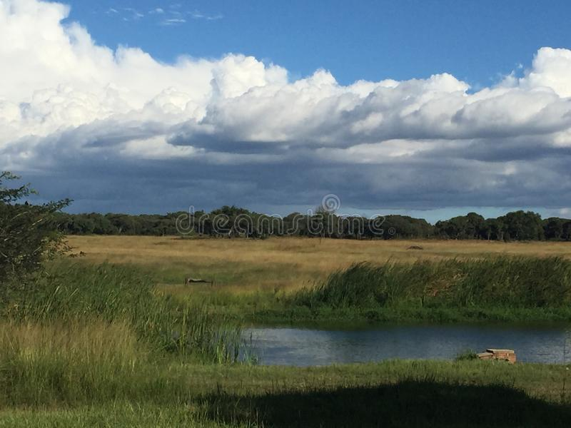 Régions boisées de Mukuvusi, Zimbabwe image libre de droits