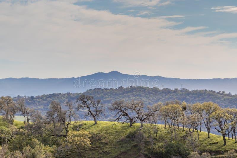 Régions boisées et sommets flous de chêne au-dessus de Santa Clara Valley photographie stock libre de droits