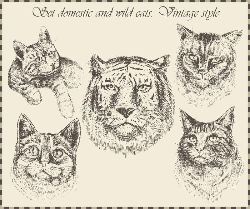 Réglé chats domestiques et sauvages illustration libre de droits