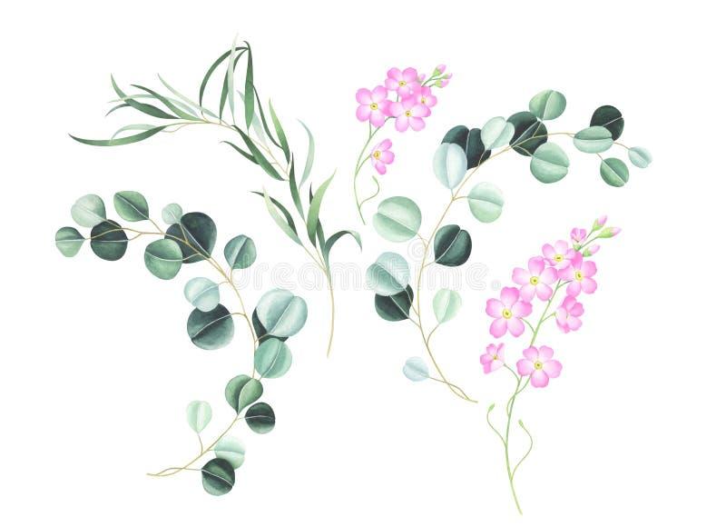 Réglé du rose oubliez-moi pas les fleurs et l'eucalyptus d'isolement sur le fond blanc illustration stock