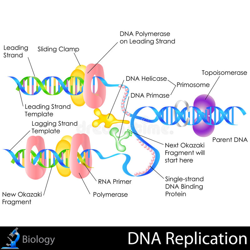 Réplica de la DNA libre illustration
