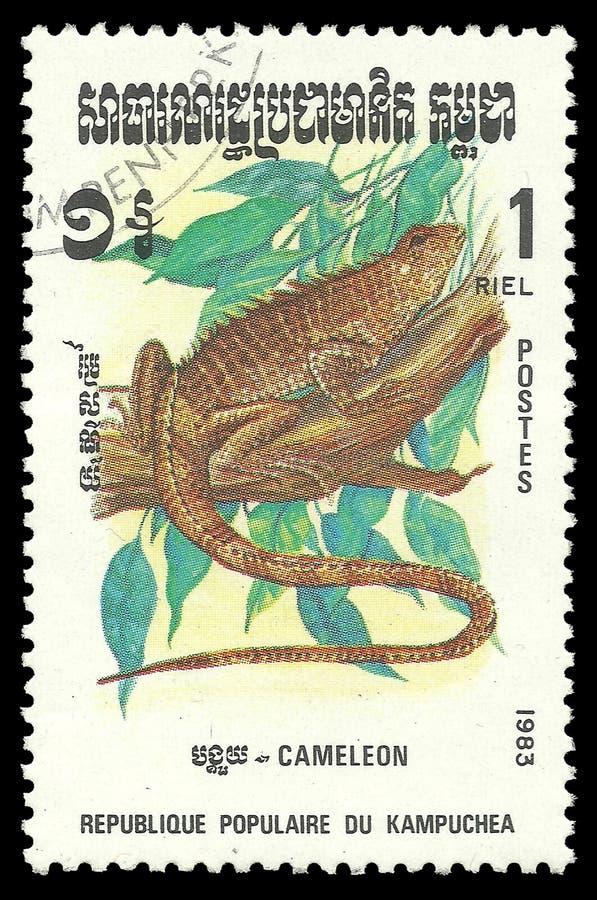 Répteis de Camboja, camaleão imagem de stock royalty free