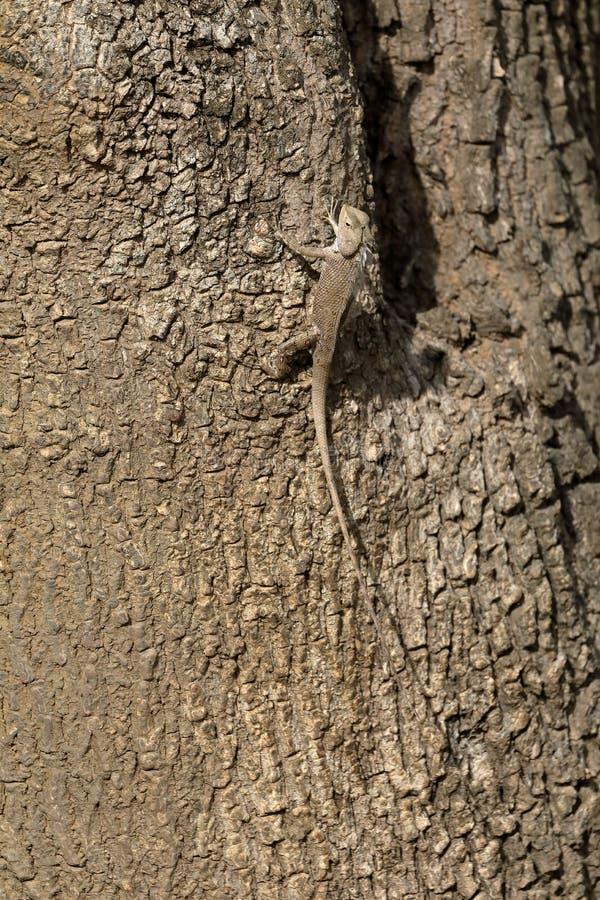 Répteis no parque nacional de Yala em Sri Lanka imagem de stock