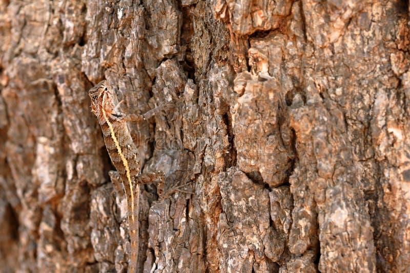 Répteis no parque nacional de Yala em Sri Lanka foto de stock