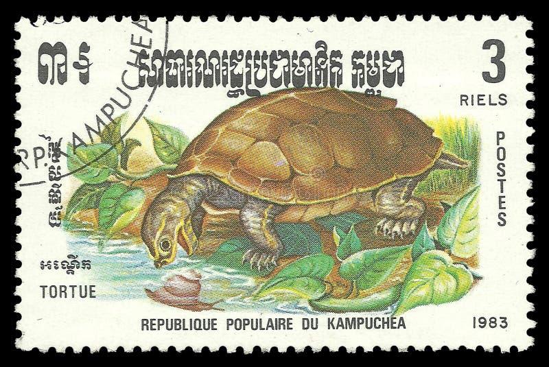 Répteis, tartaruga de água doce imagens de stock