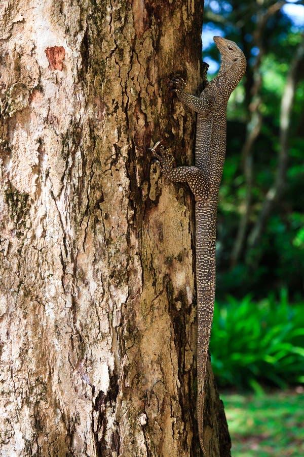 Réptil da iguana em um tronco de árvore imagem de stock royalty free