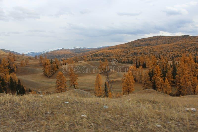 République d'Altai images libres de droits