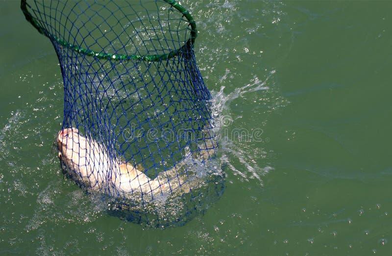 Réseau de poissons images libres de droits