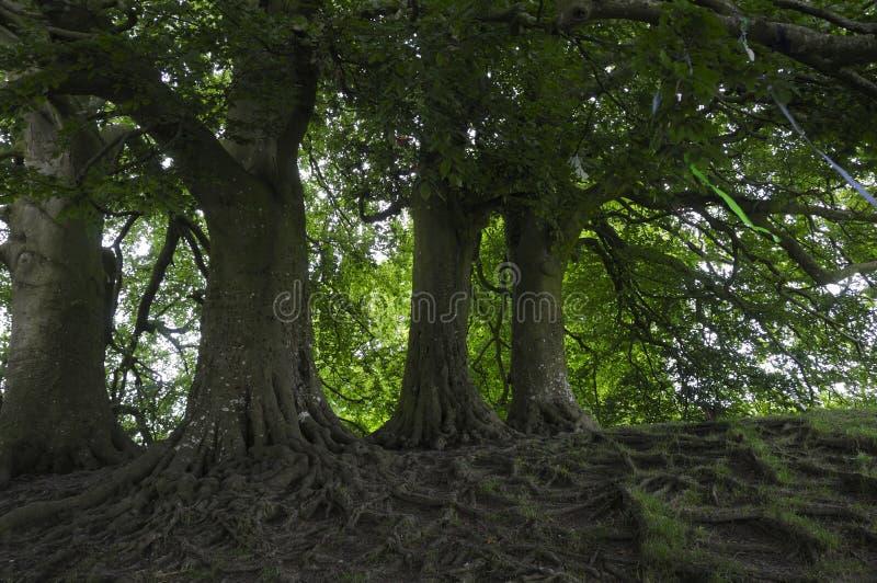 Réseau des racines photo libre de droits