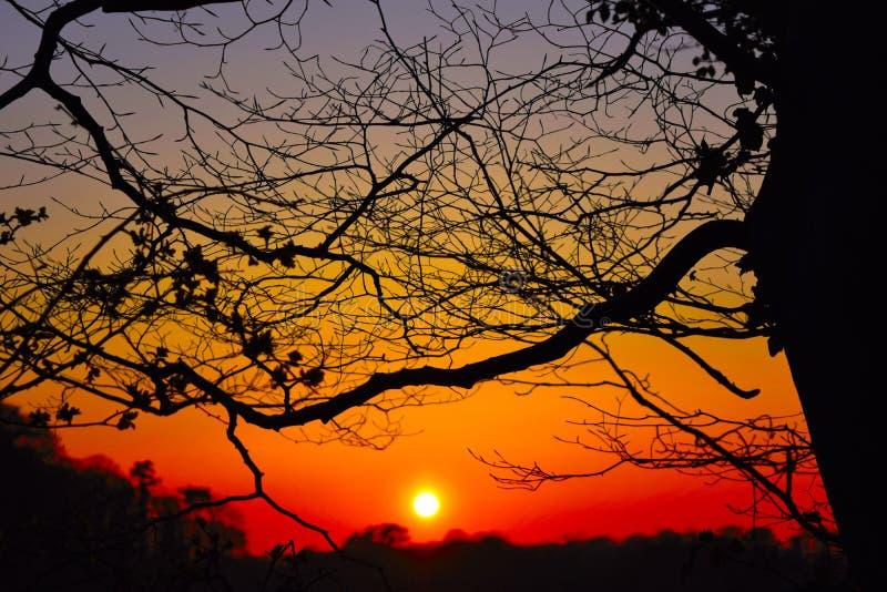 Réseau silhouetté des branches photos stock
