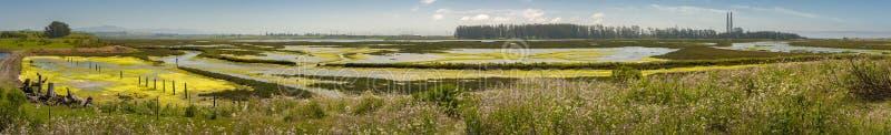 Réservation d'Elkhorn Slough, baie de Monterey, la Californie photo libre de droits
