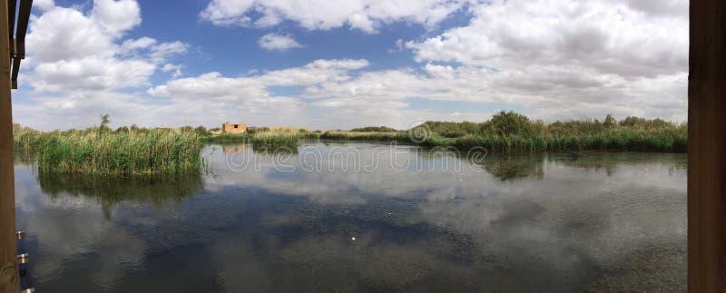 Réservation de marécages d'Azraq photographie stock libre de droits