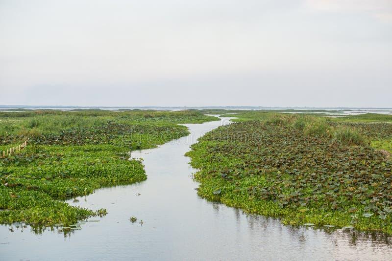 Réserve d'oiseaux aquatiques de Thale NOI image stock