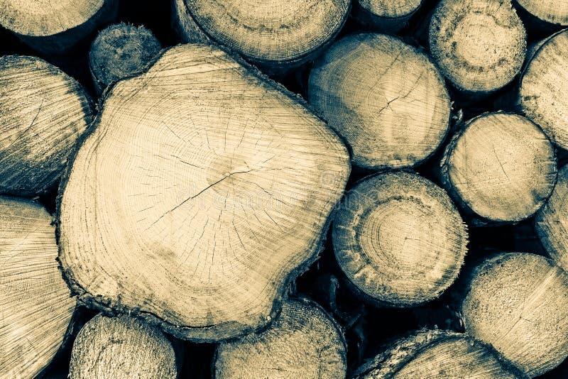 Réserve de section en bois crue d'identifiez-vous photos stock
