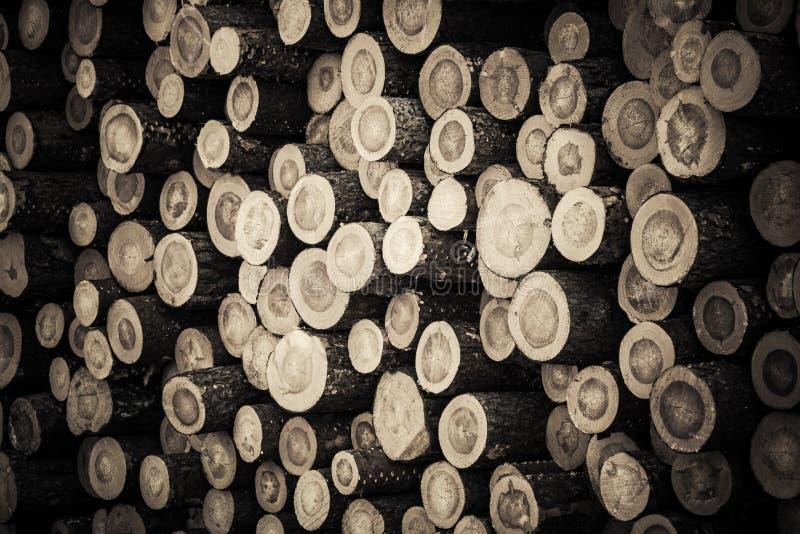 Réserve des troncs crus d'arbre forestier après la notation du bois images libres de droits
