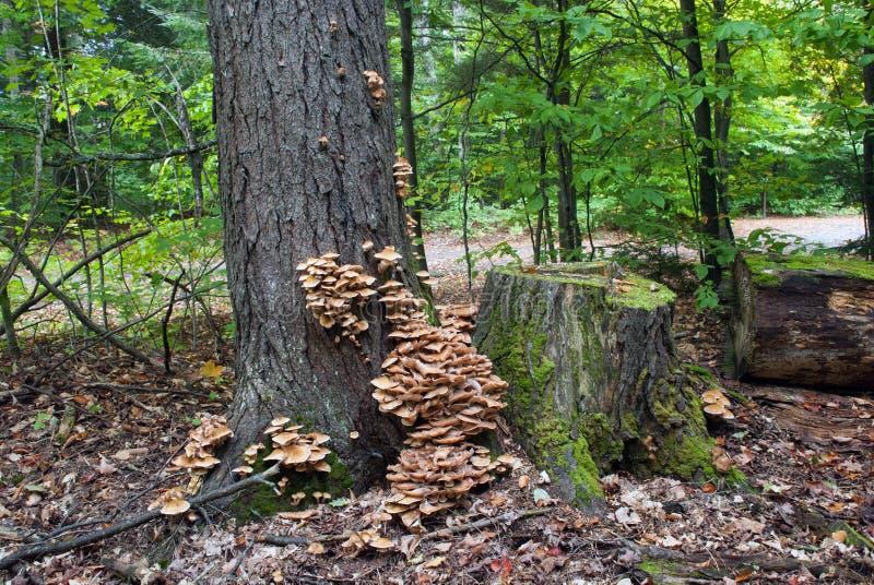 Réserve forestière de Hiawatha, Michigan, Etats-Unis photo stock