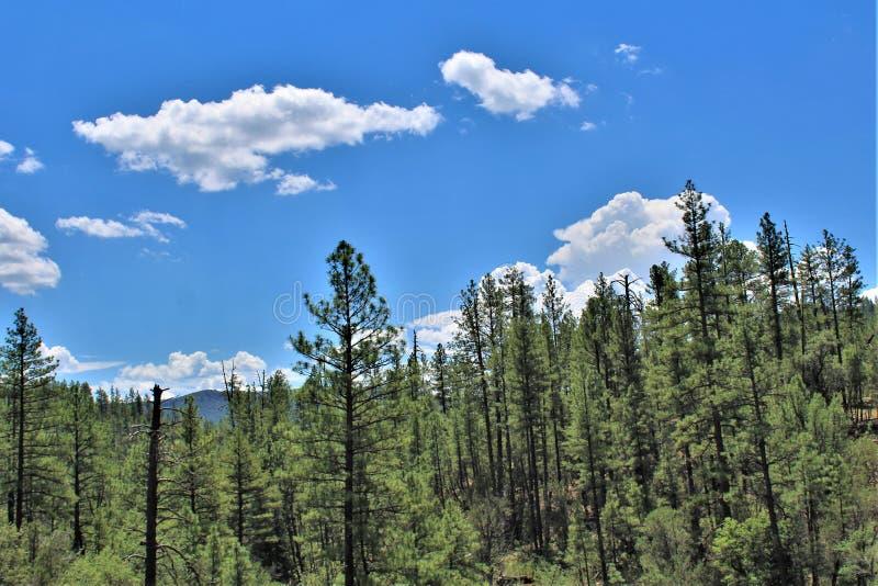 Réserve forestière de Tonto, Arizona U S Ministère de l'agriculture, Etats-Unis image libre de droits