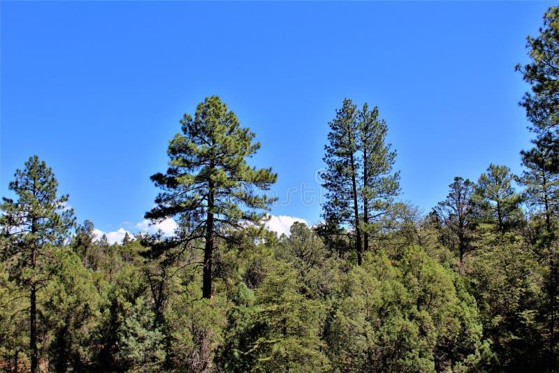 Réserve forestière de Tonto, outre de la route 87, l'Arizona U S Ministère de l'agriculture, Etats-Unis photographie stock libre de droits