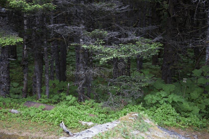 Réserve forestière de Yakutat Alaska Tongass photo libre de droits