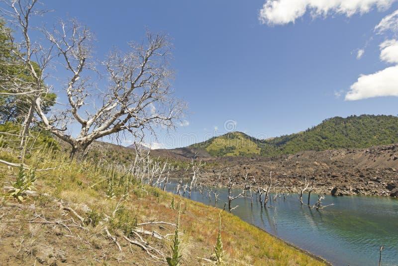 Réserve nationale de Nalcas, Patagonia chilien, Chili photographie stock