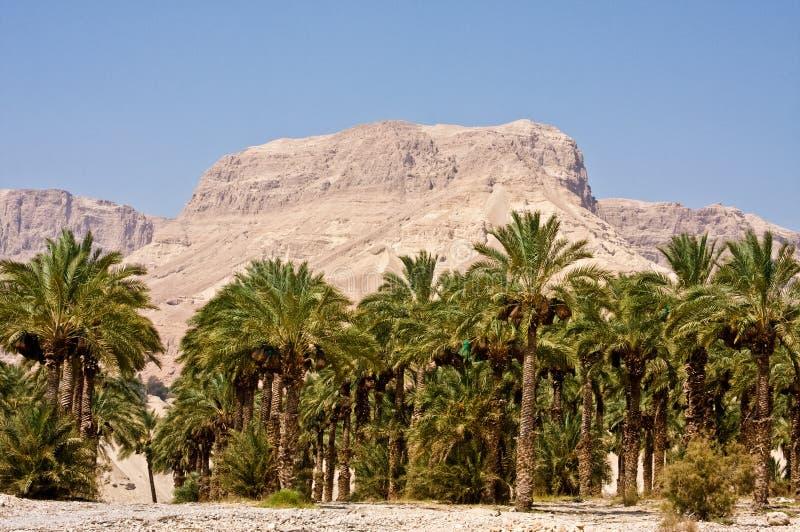 Réserve naturelle d'Ein Gedi images libres de droits
