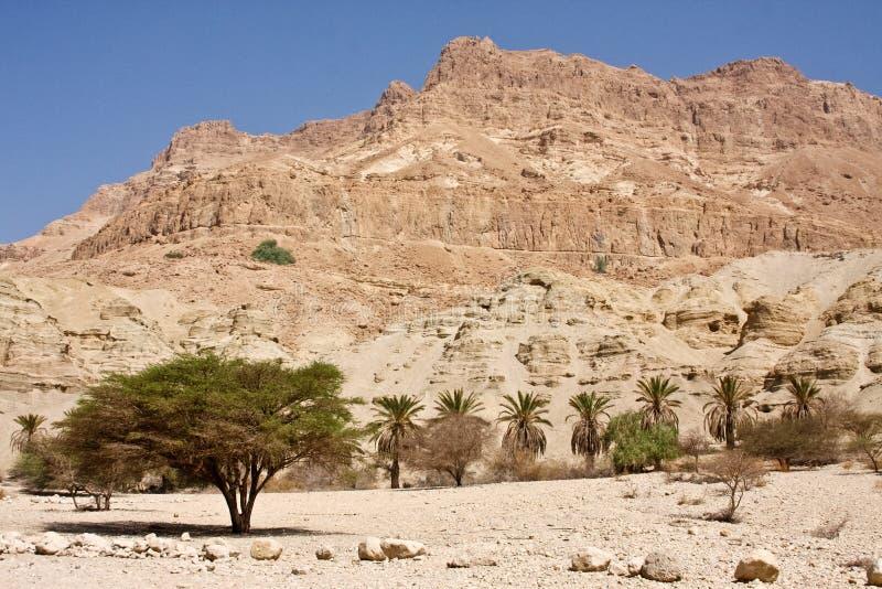 Réserve naturelle d'Ein Gedi photo stock