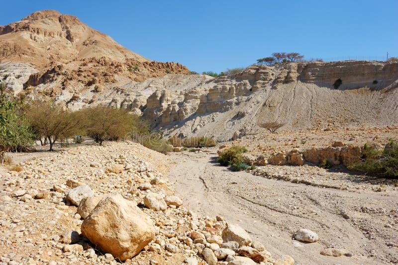 Réserve naturelle d'Ein Gedi (Israël) images stock