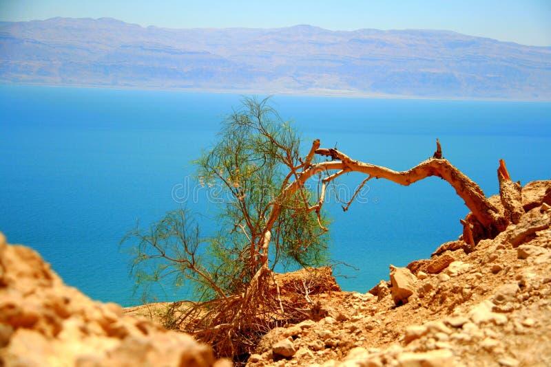 Réserve naturelle d'Ein Gedi (Israël) photos libres de droits