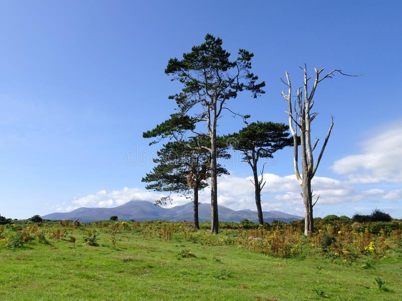Réserve naturelle de Murlough et montagnes nationales de Mourne à l'arrière-plan photo stock