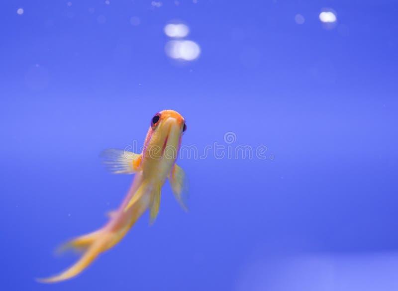 réservoir de marine de poissons d'aquarium images stock