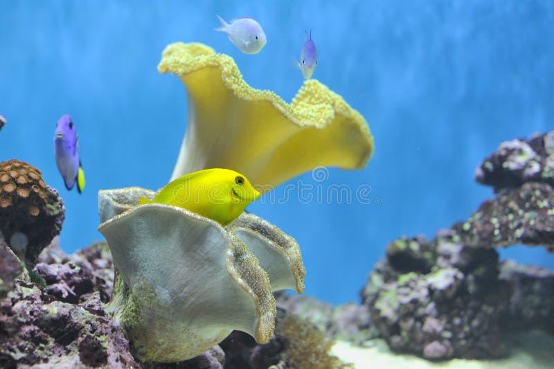Réservoir de poissons de Nemo images libres de droits
