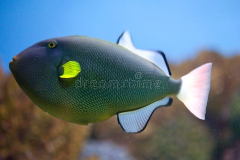 réservoir de poissons exotique images stock