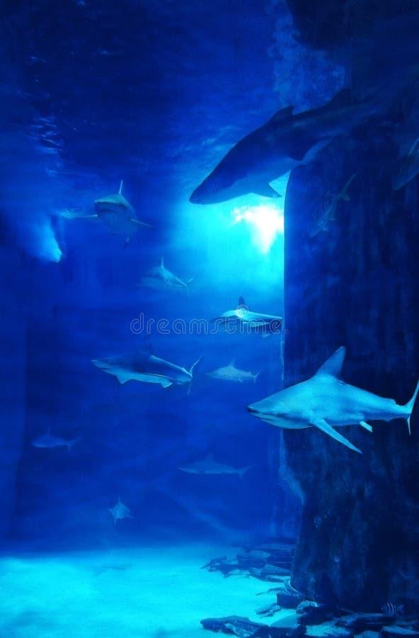 Réservoir de requin images libres de droits