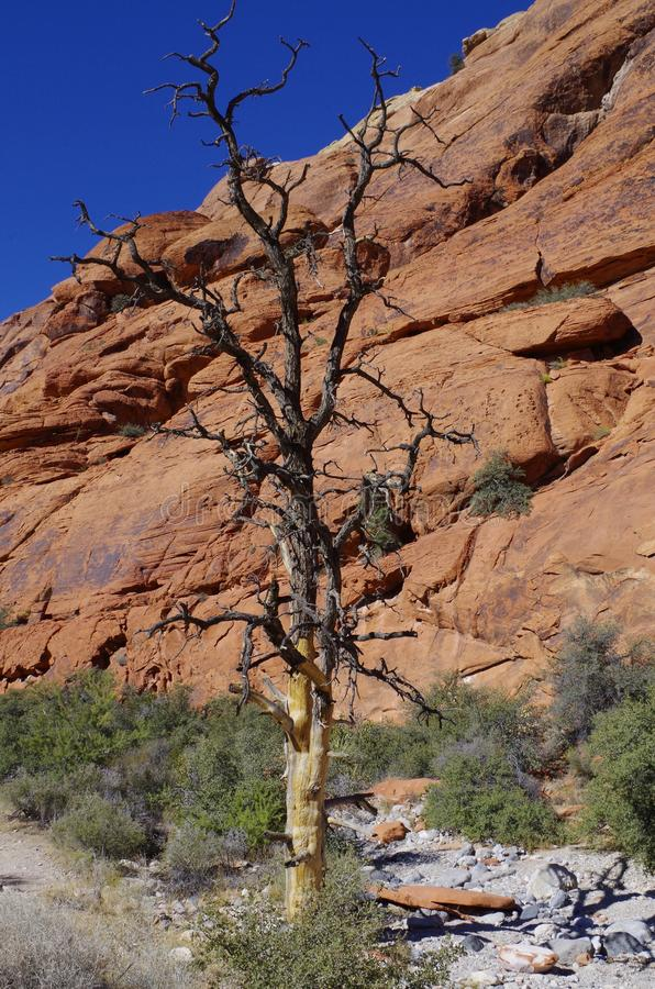 Réservoirs de calicot, région rouge de conservation de roche, Nevada du sud, Etats-Unis photo libre de droits