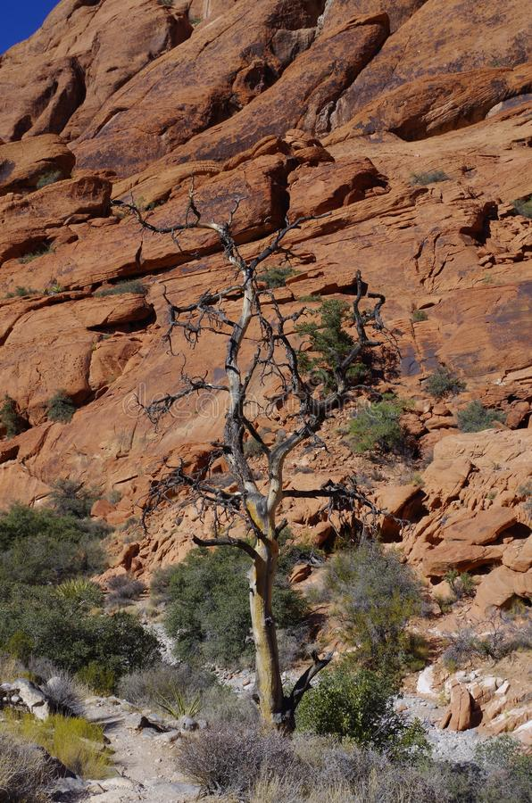 Réservoirs de calicot, région rouge de conservation de roche, Nevada du sud, Etats-Unis photographie stock libre de droits