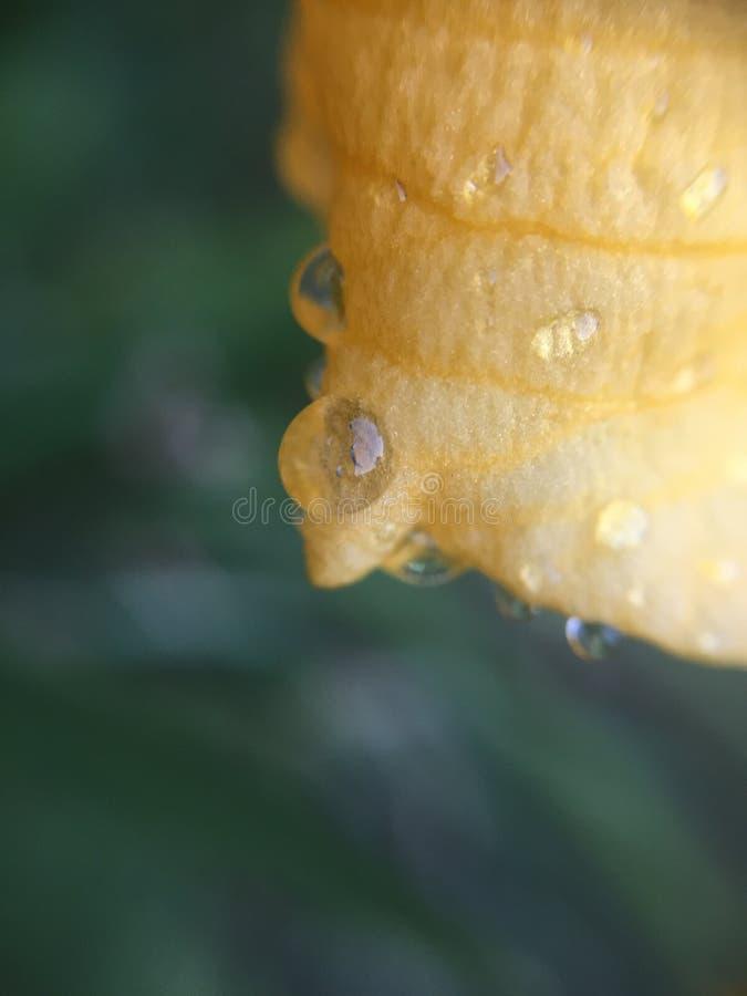 Résultat d'un jour pluvieux photographie stock