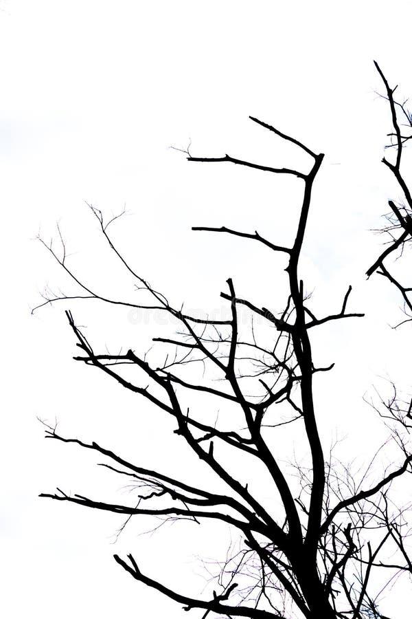 Résumé de la branche de l'arbre mort d'isolement images stock