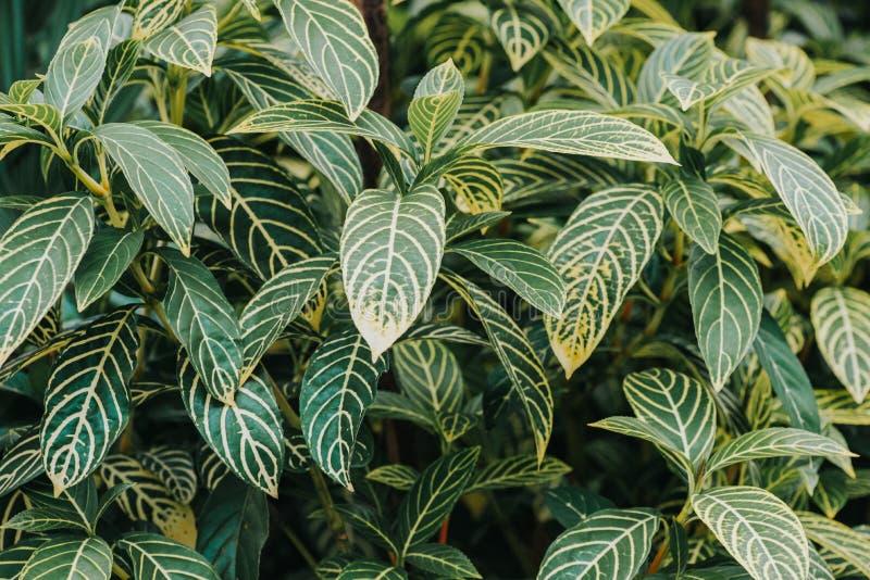 Résumé, nature Fond de feuilles vertes et beau papier peint images libres de droits