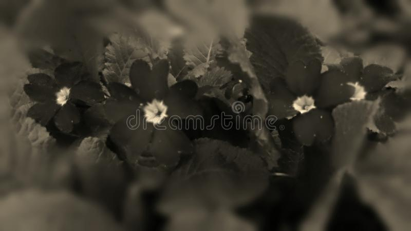 Rétro fleur de jardin de ressort de foto images libres de droits