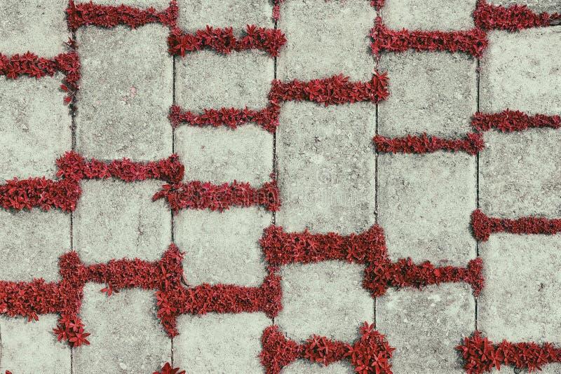 Rétro fond des tuiles en béton avec les usines rouges photographie stock libre de droits
