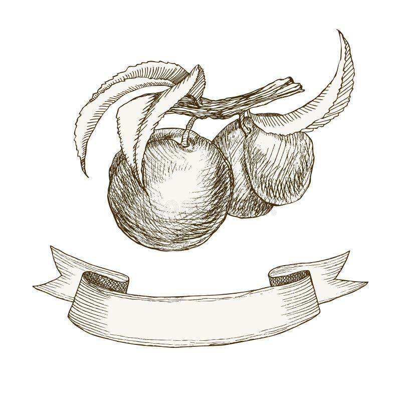 Rétro ruban de pêches de fruit illustration stock